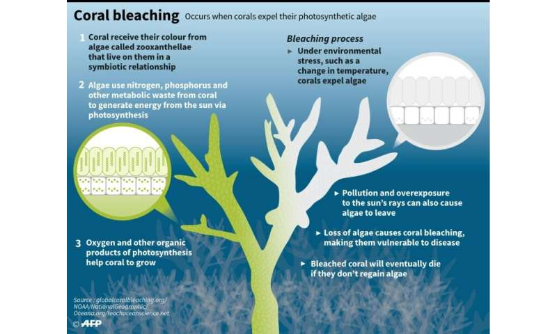 The coral bleaching process
