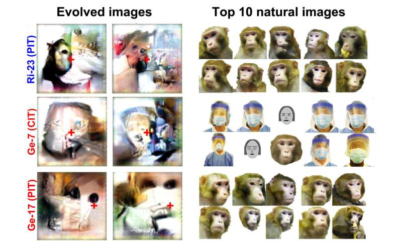 These trippy images were designed by AI to super-stimulate monkey neurons