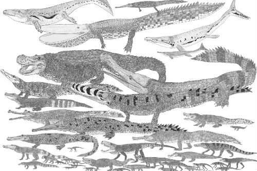 Untangling the evolution of feeding strategies in ancient crocodiles