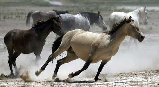Wanted: More pastures for West's overpopulated wild horses