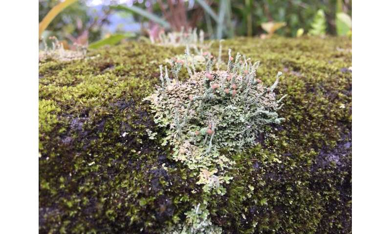 When the dinosaurs died, lichens