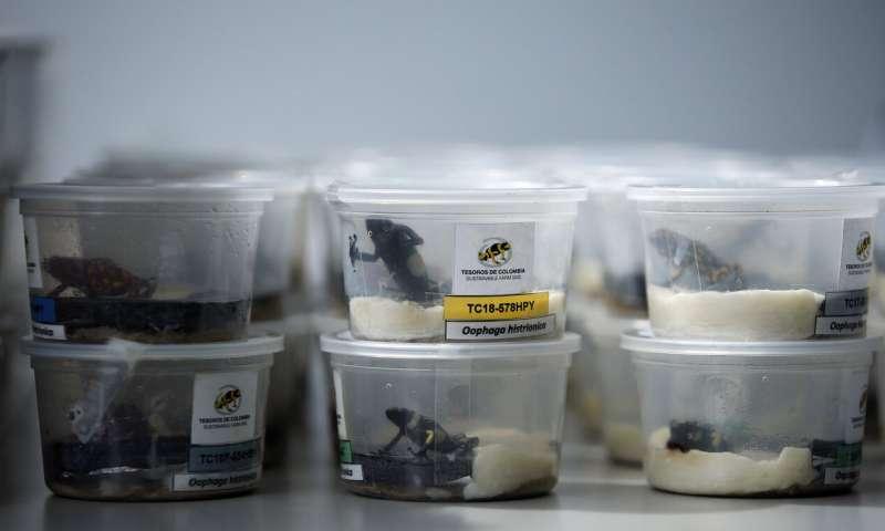 Razas colombianas raras para socavar a los traficantes de animales