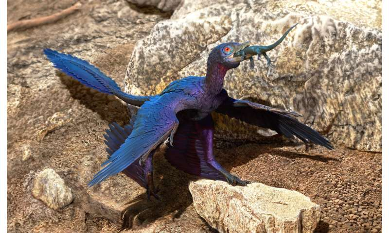 New species of lizard found in stomach of microraptor