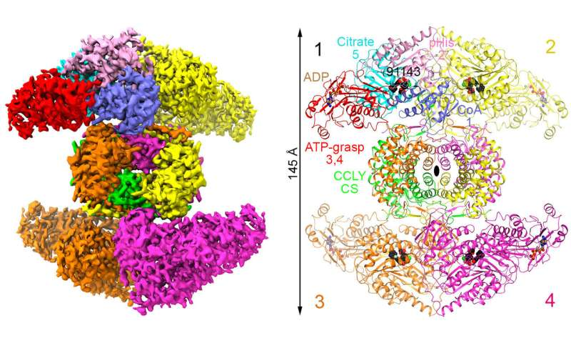Scientists decipher 3D structure of a promising molecular target for cancer treatment