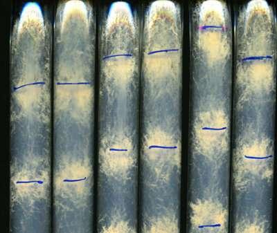 Understanding circadian rhythms in algae and fungi