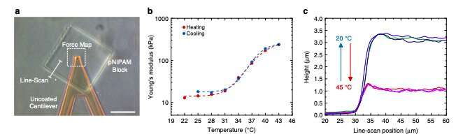 **Researchers develop 3D microstructures that respond to temperature and light