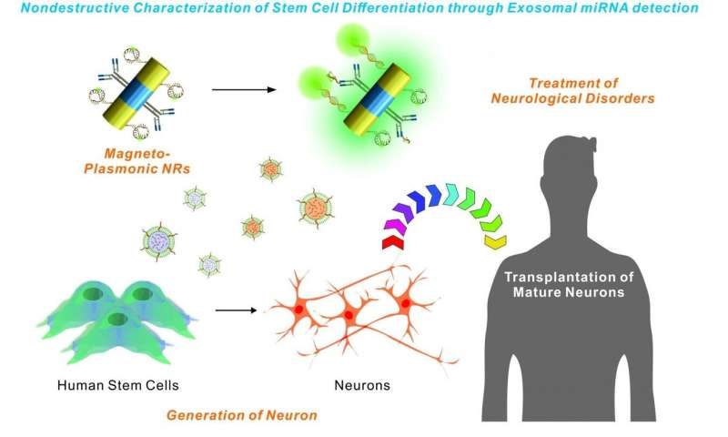New technology could aid stem cell transplantation research