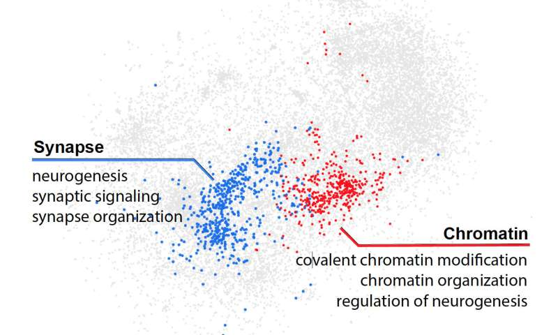 Study Pinpoints Autism Linked Protein >> Artificial Intelligence Detects A New Class Of Mutations Behind Autism