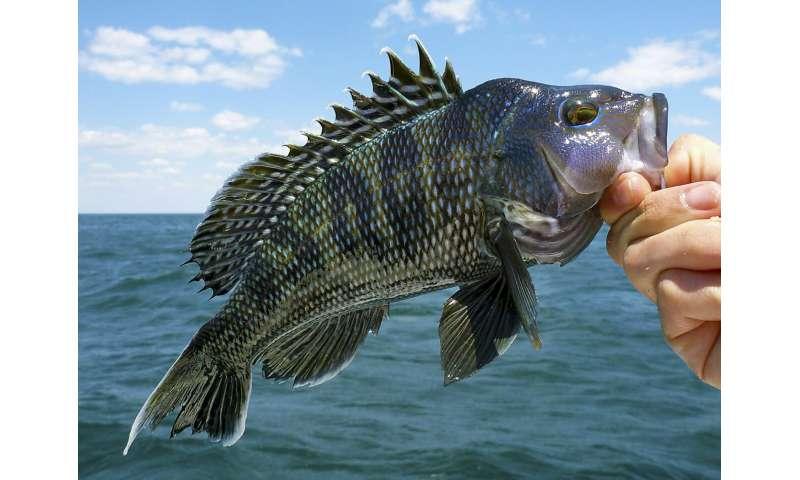 Un estudio liderado por Rutgers encuentra que el cambio climático encoge muchas pesquerías a nivel mundial