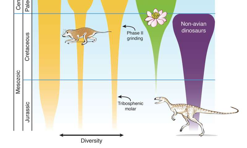 Flowering plants, new teeth and no dinosaurs: New study sheds light on the rise of mammals