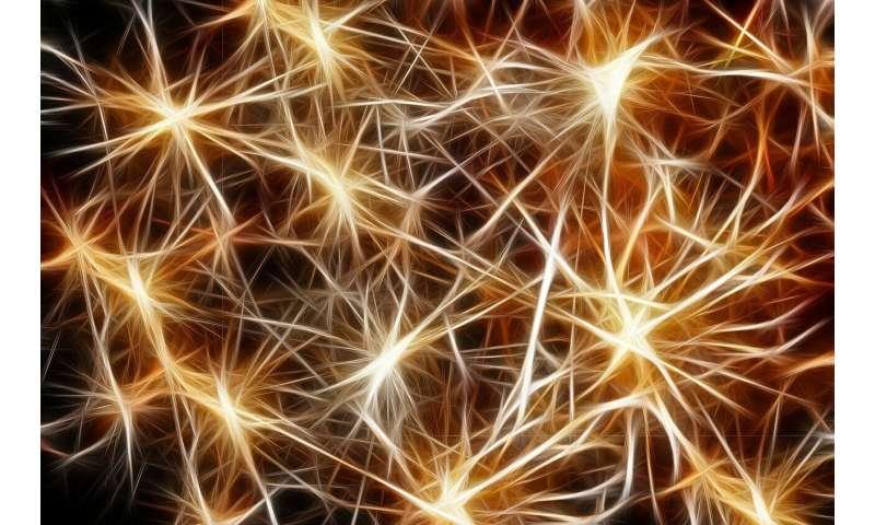 [Image: 3-neuron.jpg]