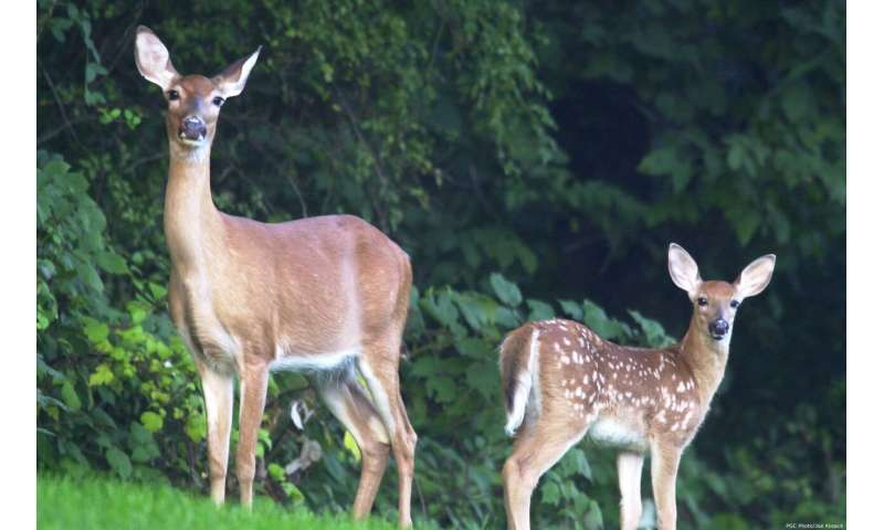 Northeastern deer more susceptible to wasting disease than those to the west