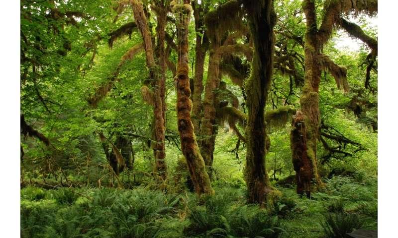 جنگل گرمسیری