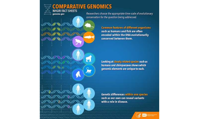 Sequencing the white shark genome is cool, but for bigger insights we need libraries of genetic data