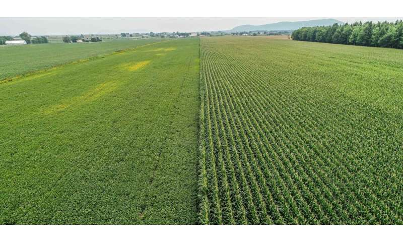 Study examines how herbicide adds to phosphorus levels in soil and waterways