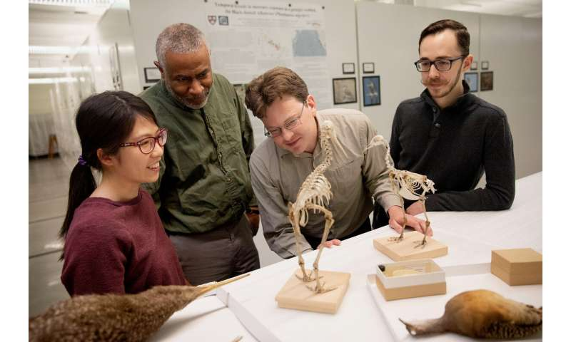 Study explores genetics behind evolution of flightless birds