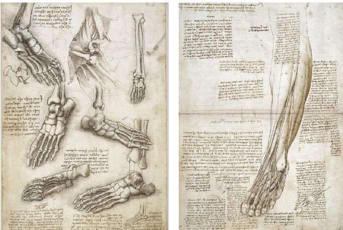 The body according to Leonardo da Vinci