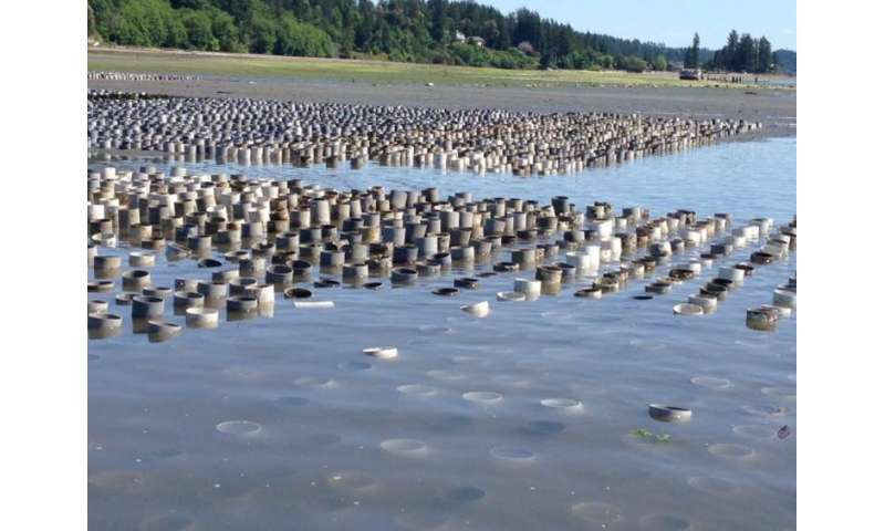 The demand for luxury shellfish is polluting the ocean with plastic