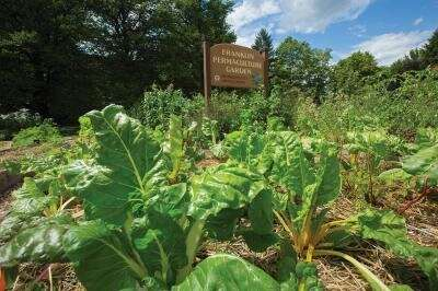 UMass Amherst student-led permaculture gardens serve as model for sustainable agriculture