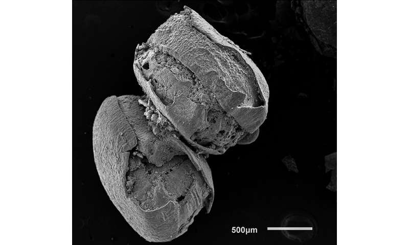 3,000-year-old eastern North American quinoa discovered in Ontario