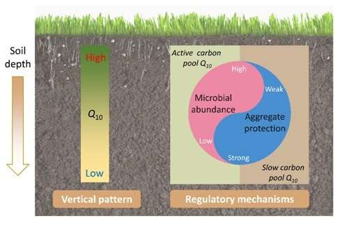 Researchers reveal mechanisms for regulating temperature sensitivity of soil organic matter decompos