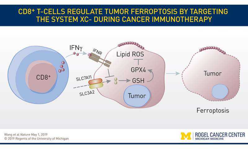 Researchers find new target to improve response to cancer immunotherapy