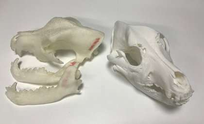 3-D printing to save dogs' day