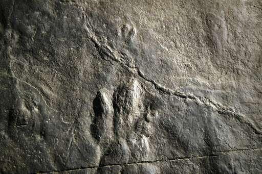 Dinosaur tracks make fresh impression at Valley Forge park
