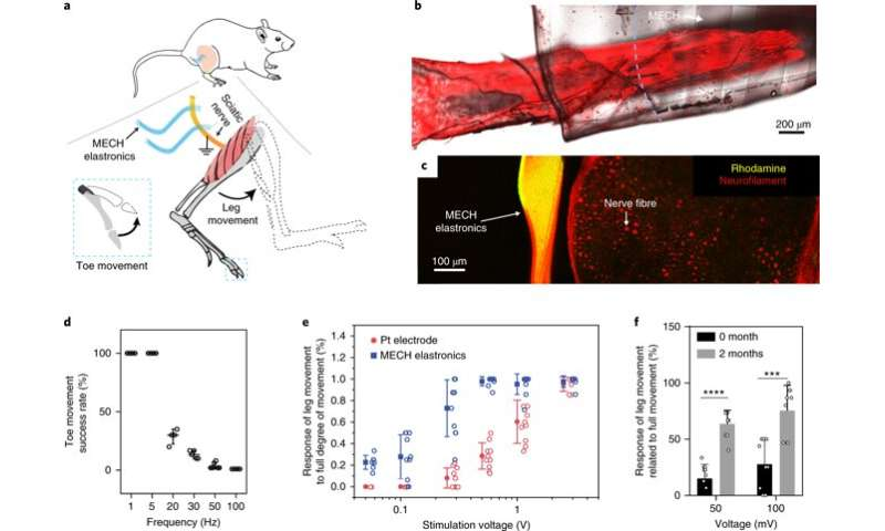 **Elastronics - Hydrogel-based microelectronics for localized low-voltage neuromodulation