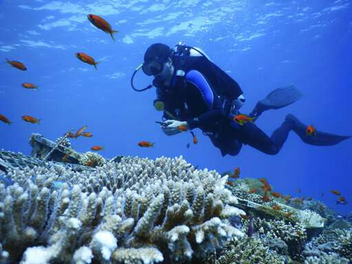 Northern Red Sea coral reefs may survive a hot, grim future