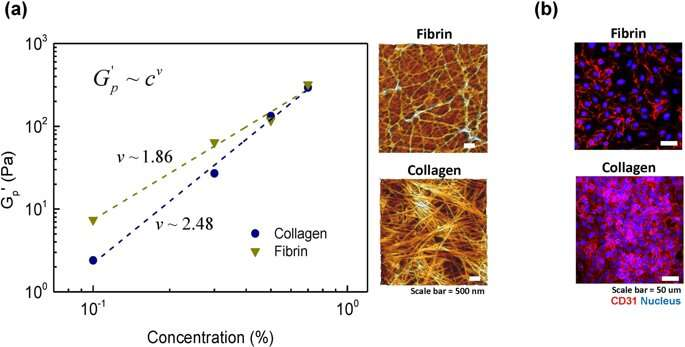 **Semi-flexible model-based analysis of cell adhesion to hydrogels