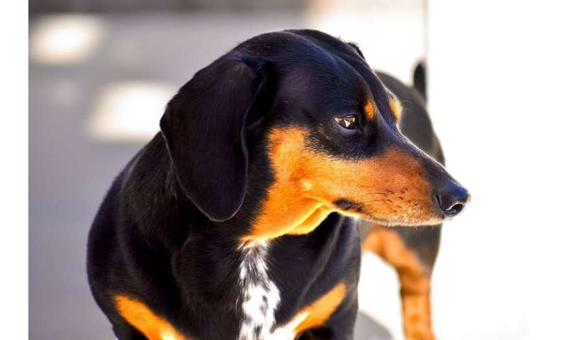 Understanding dog personalities can prevent attacks