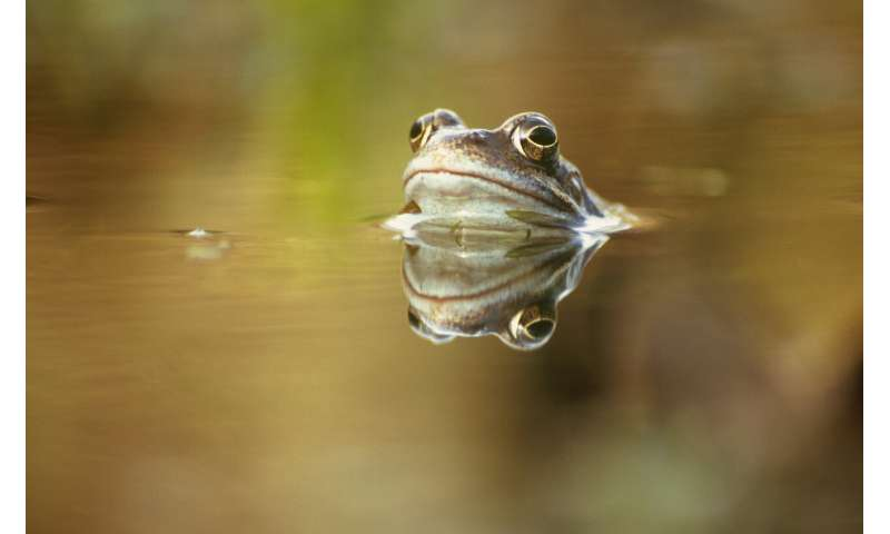 Climate change responsible for severe infectious disease in UK frogs