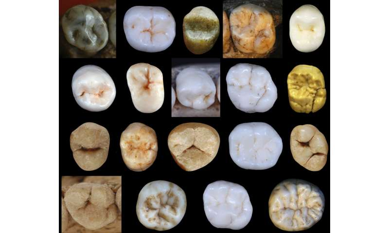 Neanderthals and modern humans diverged at least 800,000 years ago