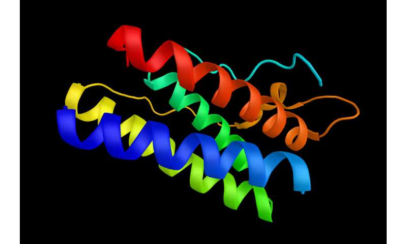 Researchers find new mutation in the leptin gene
