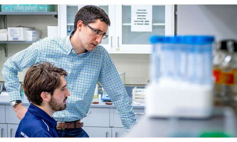 Researchers add nerve fibers to the spine cord in early development