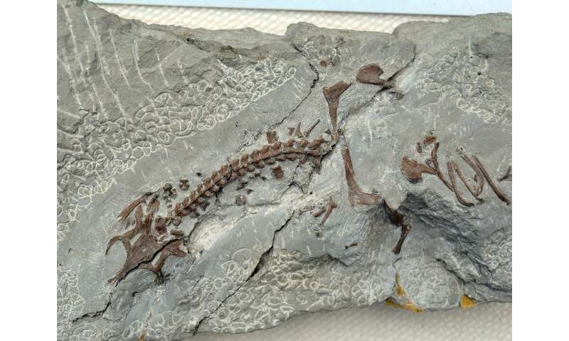 Fossil deposit is much richer than expected