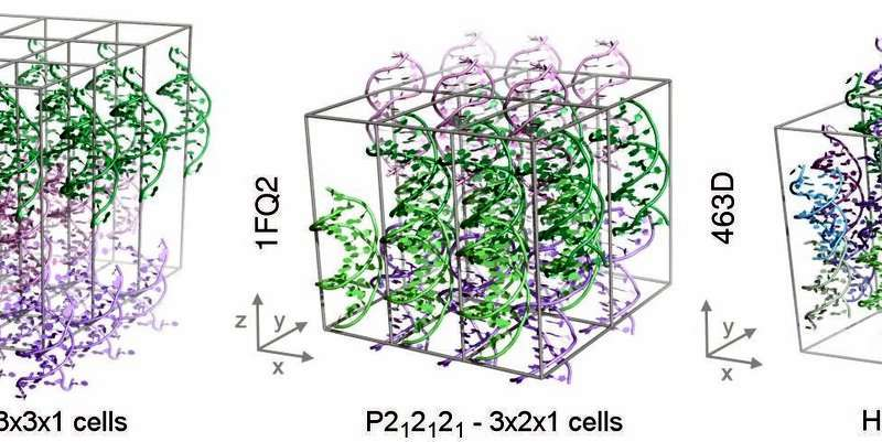 Scientists achieve the first stable simulations of DNA crystals