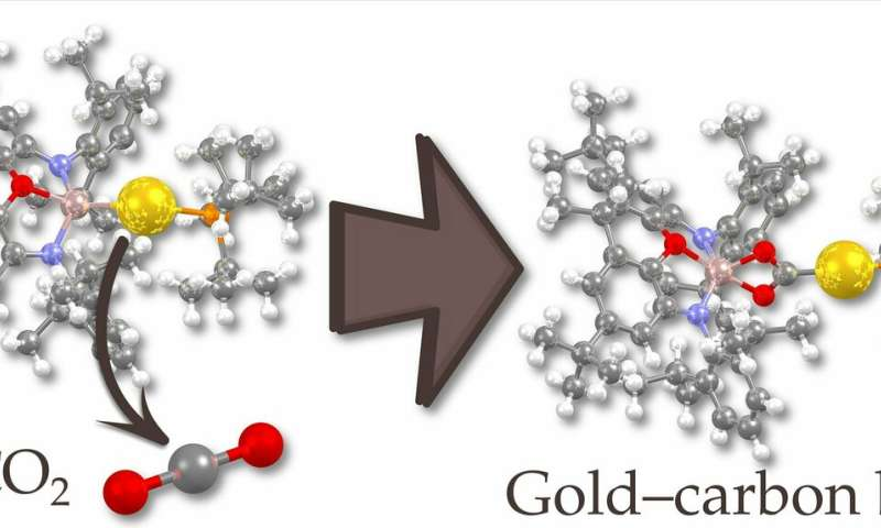 The first nucleophilic gold complex