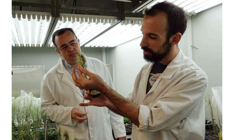 Researchers identify gene essential for plants to survive