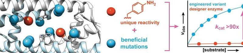 Directed evolution of a designer enzyme with an unnatural catalytic amino acid