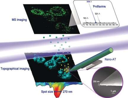 Chemical and topographical single-cell imaging at nanoscale resolution by near-field desorption mass spectrometry
