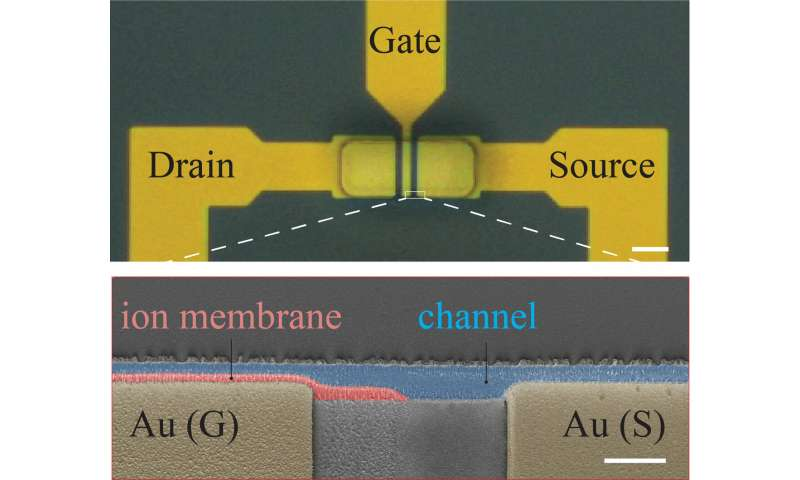 Fast, flexible ionic transistors for bioelectronic devices