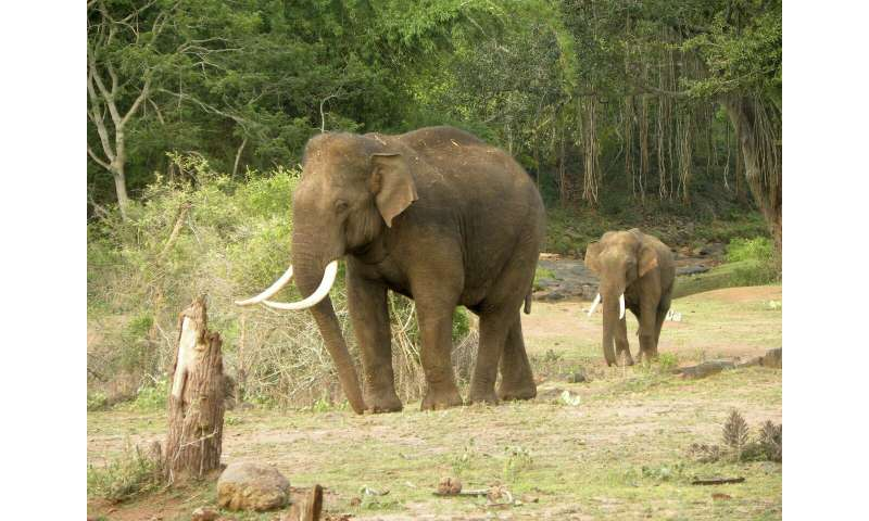 Asian elephants may lose up to 42 percent of suitable habitats in India and Nepal by 2070