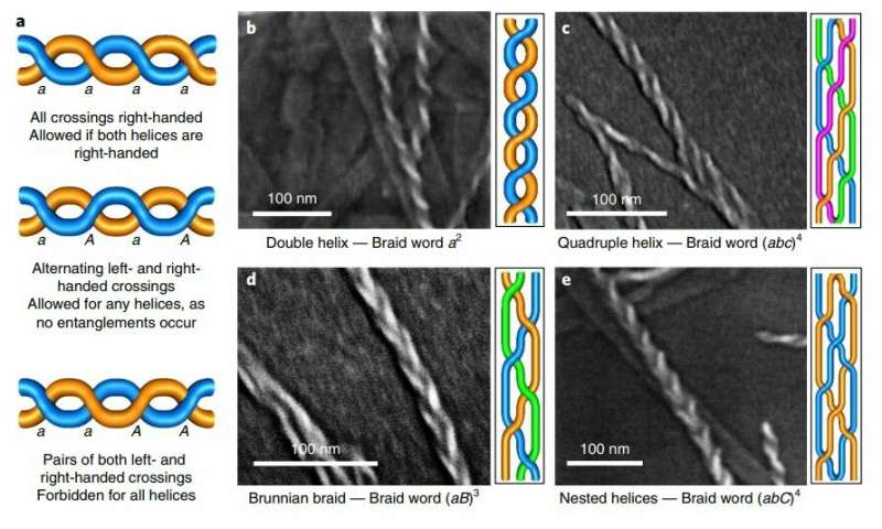 **Protein chains that self-form into helical braids