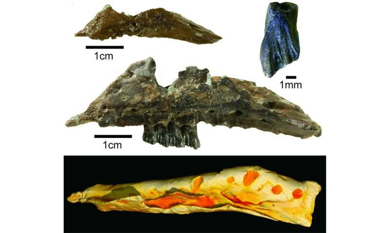 New wallaby-sized dinosaur from the ancient Australian-Antarctic rift valley
