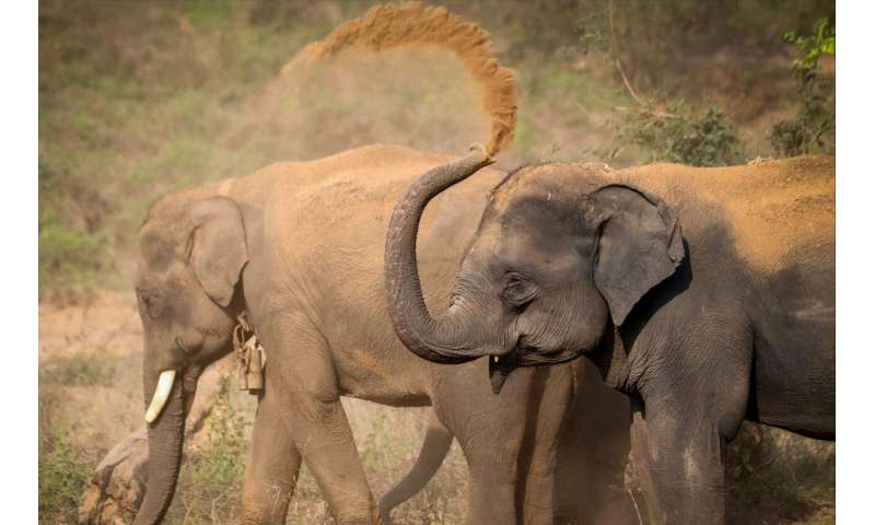 Sex differences in personality traits in Asian elephants