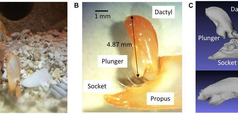 Engineers copy snapping shrimp to produce underwater plasma