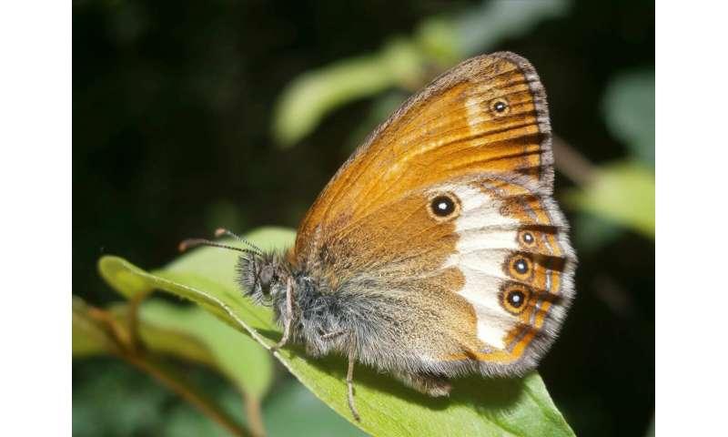 Las mariposas disminuyen en dos tercios: los científicos piden un cambio en los enfoques agrícolas