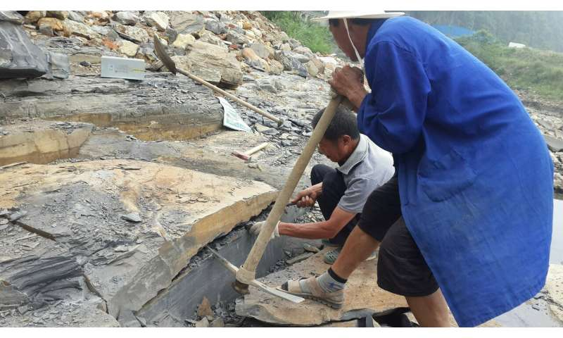 **Treasure trove of marine fossils from 'Cambrian explosion' found in China
